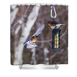 Docking Bluebird Shower Curtain