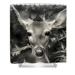 Doe's Summer Portrait Shower Curtain