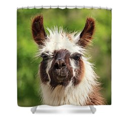 Don't Hate Me Because I'm Beautiful Shower Curtain
