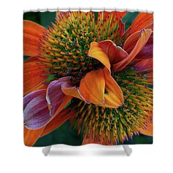 Shower Curtain featuring the photograph Double Coneflower by Dale Kincaid