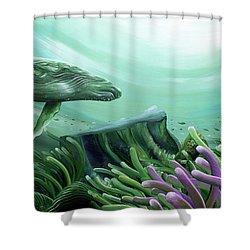 Down Under Shower Curtain