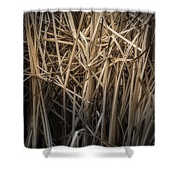 Dried Wild Grass II Shower Curtain
