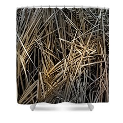 Dried Wild Grass IIi Shower Curtain