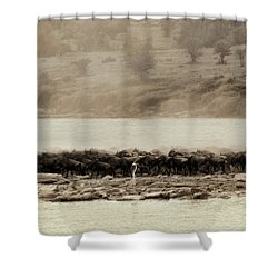 Shower Curtain featuring the photograph Dust Of The Migration by Kay Brewer