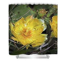 Shower Curtain featuring the photograph Eastern Prickley Pear Cactus Flower On Assateague Island by Bill Swartwout Fine Art Photography