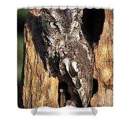 Eastern Screech Owl 92515 Shower Curtain