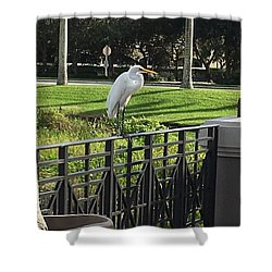 Egret Posing Shower Curtain