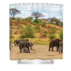 Shower Curtain featuring the photograph Elephants Drill For Water by Kay Brewer