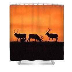 Elk In The Morning Light Shower Curtain