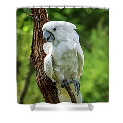 Endangered White Cockatoo Shower Curtain