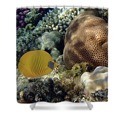 Exciting And Beautiful Red Sea World 2 Shower Curtain