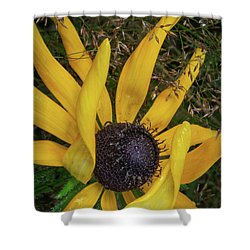 Shower Curtain featuring the photograph Extraordinary by Dale Kincaid