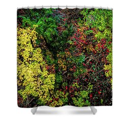 Shower Curtain featuring the photograph Fall Color Along The Big Tom by Jon Burch Photography