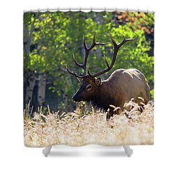 Shower Curtain featuring the photograph Fall Color Rocky Mountain Bull Elk by Nathan Bush