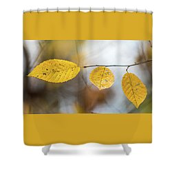 Shower Curtain featuring the photograph Fall In Triplicate by Michael Arend