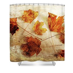Shower Curtain featuring the photograph Fall Keepers by Randi Grace Nilsberg