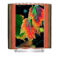 Shower Curtain featuring the photograph Fall Leaves 6072 Framed by Jerry Sodorff