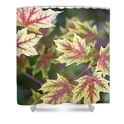 Fall Red And Yellow Leaves 10081501 Shower Curtain