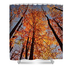 Fall Trees Sky Shower Curtain