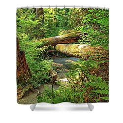 Fallen Trees In The Hoh Rain Forest Shower Curtain