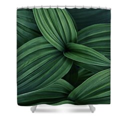 Shower Curtain featuring the photograph False Hellebore Plant Abstract by Nathan Bush