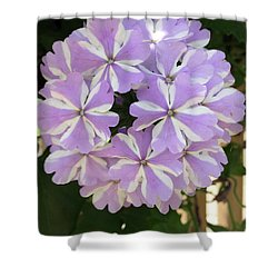 Fancy Phlox Shower Curtain