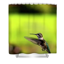 Shower Curtain featuring the photograph Female Ruby Wings Forward by Onyonet  Photo Studios