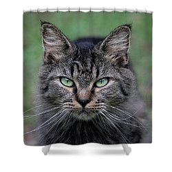 Feral Cat Shower Curtain