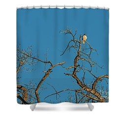 Shower Curtain featuring the photograph Ferrunginous Hawk In Tree by Jon Burch Photography