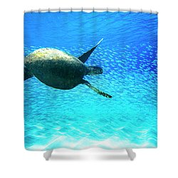 Fish Swoop Shower Curtain