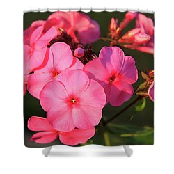 Flaming Pink Phlox Shower Curtain