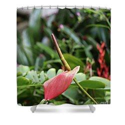 Flamingo Flower - Anthurium Andreanum Shower Curtain