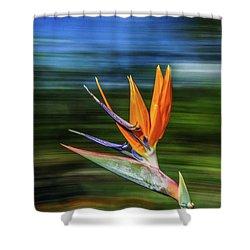 Flying Bird Of Paradise Shower Curtain