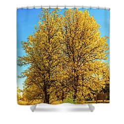 Foliage Shower Curtain