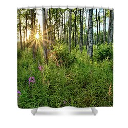 Shower Curtain featuring the photograph Forest Growth Alaska by Nathan Bush