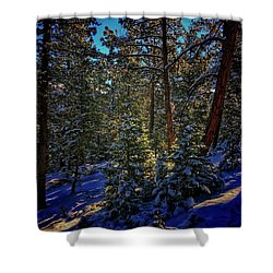 Shower Curtain featuring the photograph Forest Shadows by Dan Miller