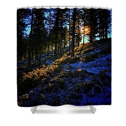 Shower Curtain featuring the photograph Forest Sunrise by Dan Miller