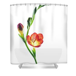 Freesia 2 Shower Curtain