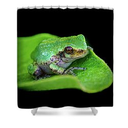 Frogie Shower Curtain
