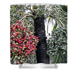 Fruity Palm Tree  Shower Curtain