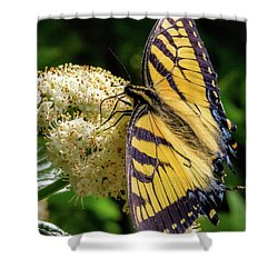 Fuzzy Butterfly Shower Curtain