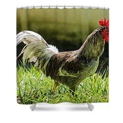 Gallo Shower Curtain