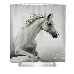 Shower Curtain featuring the photograph Galloping White Horse by Dimitar Hristov