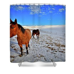 Shower Curtain featuring the photograph Geldings In The Snow by David Patterson