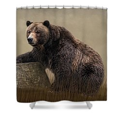 Gentle Ben Shower Curtain