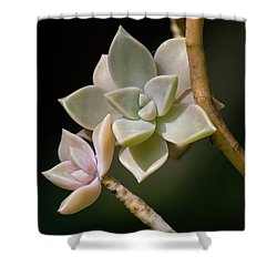 Shower Curtain featuring the photograph Ghost Plant by Dale Kincaid
