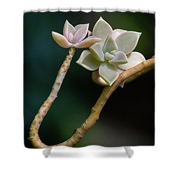 Shower Curtain featuring the photograph Ghost Plant Succulent by Dale Kincaid