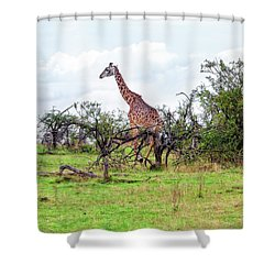 Shower Curtain featuring the photograph Giraffe Landscape by Kay Brewer
