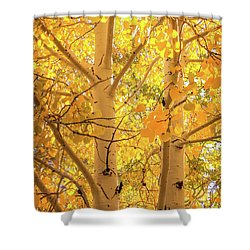 Golden Aspens In Grand Canyon, Vertical Shower Curtain