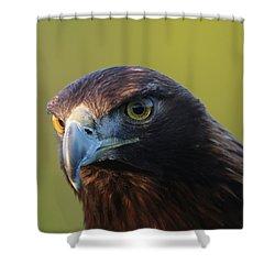 Golden Eagle 5151802 Shower Curtain